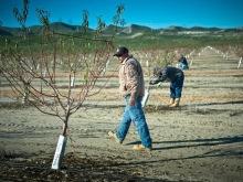Hope on fallowed fields
